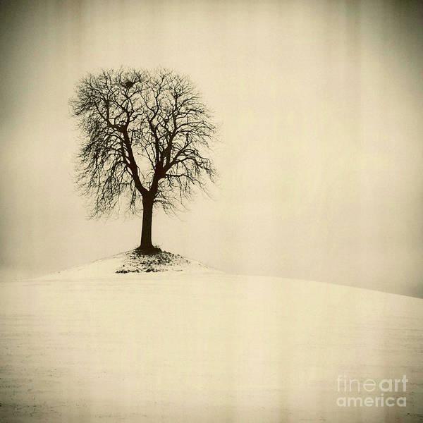 Wall Art - Photograph - Isolatedtree On A Snow Covered Field by Bernard Jaubert