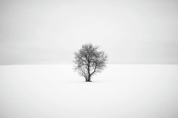 Richard Photograph - Isolation  by Richard Nixon