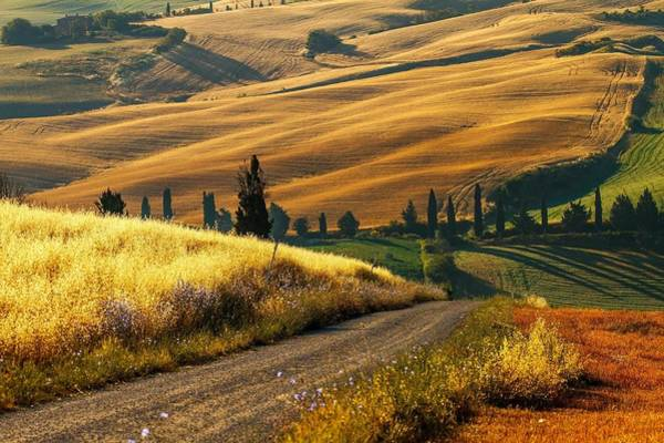 Wall Art - Digital Art - Italian Fields by Brahaman Dhumsi