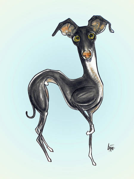 Drawing - Italian Greyhound by John LaFree