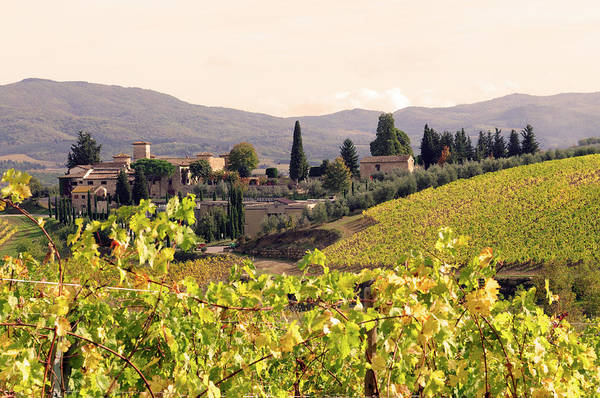 Cultivate Photograph - Italian Village And Vineyard In Fall by Lisa-blue