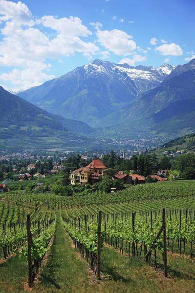 Winemaking Photograph - Italy, Meranomeran by Hiroshi Higuchi