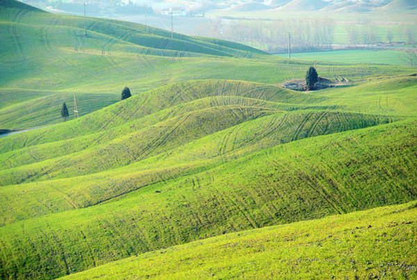 Wall Art - Photograph - Italy, Tuscany, Green Wheat Fields In by Guy Christian / Hemis.fr