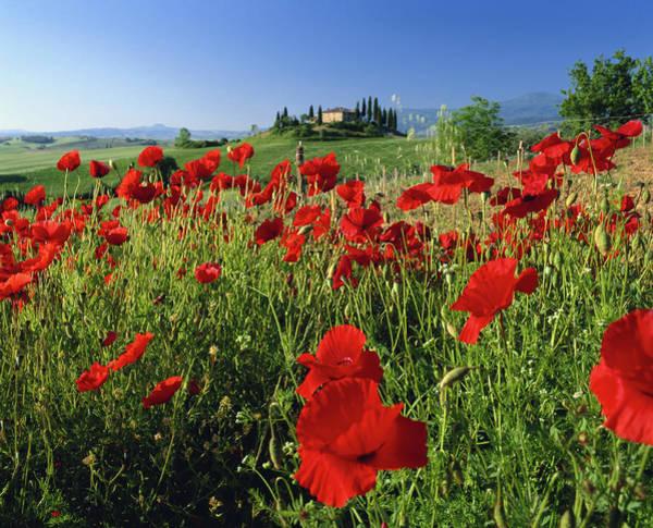 Wall Art - Photograph - Italy, Tuscany, San Quirico Dorcia by David C Tomlinson