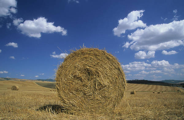 Cultivate Photograph - Italy, Tuscany, Val Docia, Hay Bale by Stefano Stefani