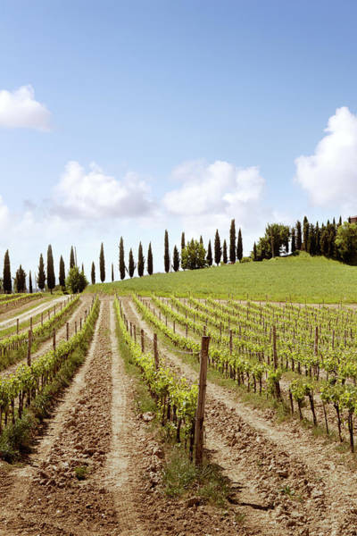 Italian Wine Photograph - Italy Tuscany - Vineyard by Floortje