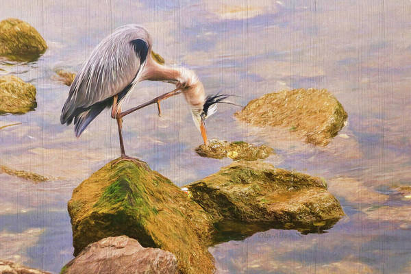 Photograph - Itchy  Neck Heron by Ola Allen