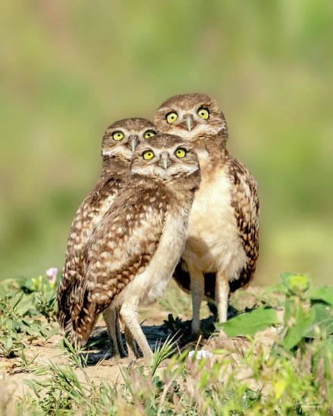 Photograph - It's A Plane, It's A Bug, It's A Bird -- Burrowing Owl Babies by Judi Dressler