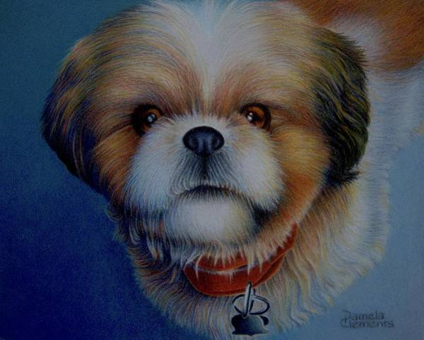 Drawing - It's Frankie by Pamela Clements