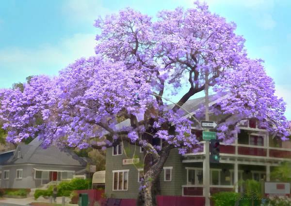 Photograph - Jacaranda Tree, Wider View by Brian Tada