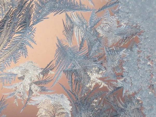 Photograph - Jack Frost Beauty  by Sharon Duguay