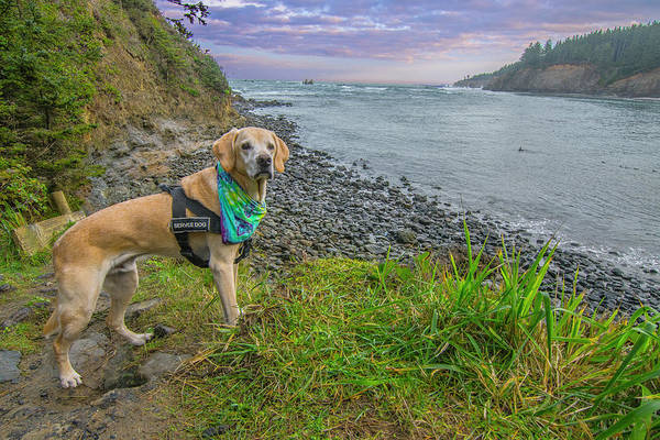 Photograph - Jackson At Cape Arago by Matthew Irvin