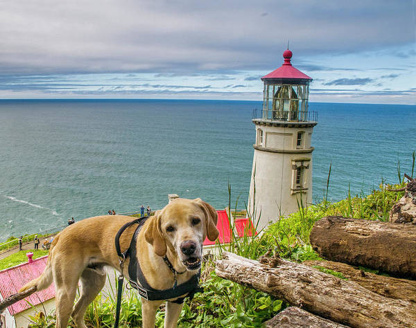 Photograph - Jackson At Heceta Head Lighthouse by Matthew Irvin