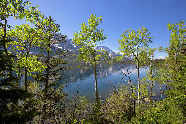 Photograph - Jackson Lake by Sue Collura