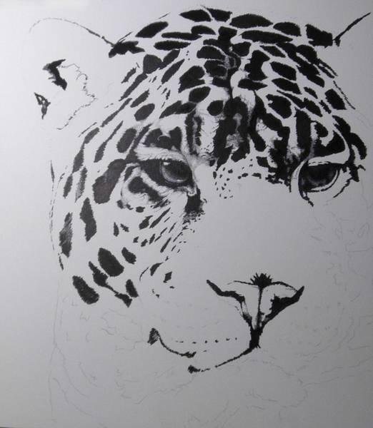 Drawing - Jaguar 6 by Barbara Keith