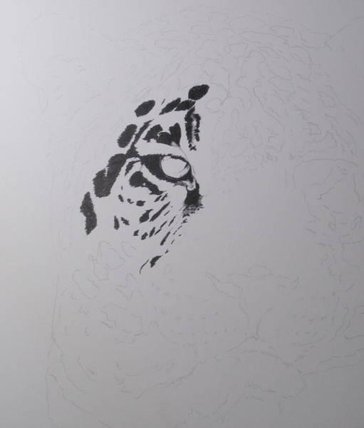 Drawing - Jaguar by Barbara Keith