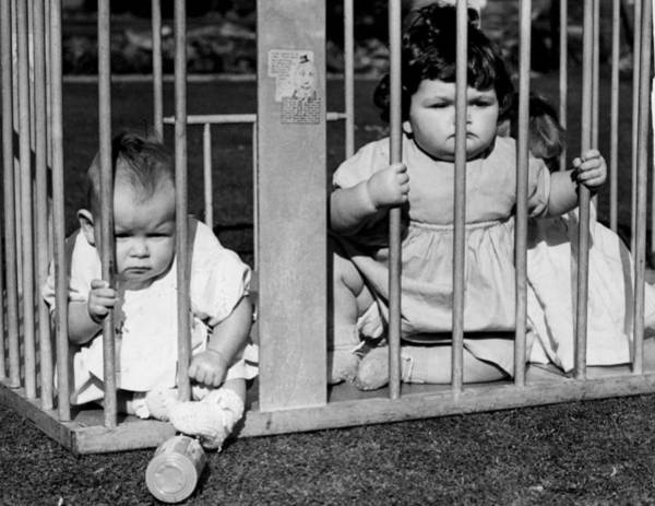 Cage Photograph - Jailbird Babies by Gerry Cranham