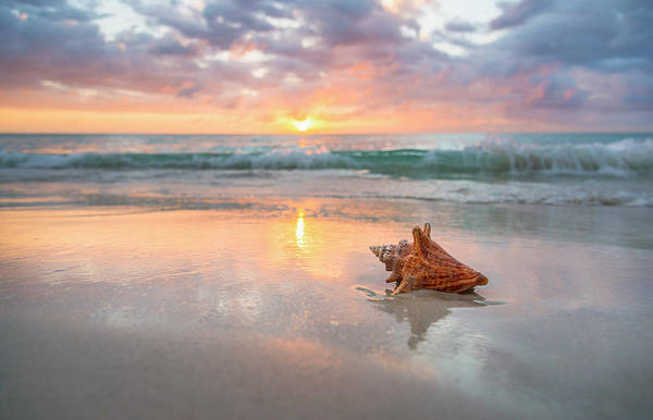 Sunlight Photograph - Jamaica, Conch Shell On Beach by Tetra Images