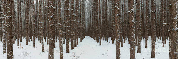 Wall Art - Photograph - January Forest by Twenty Two North Photography