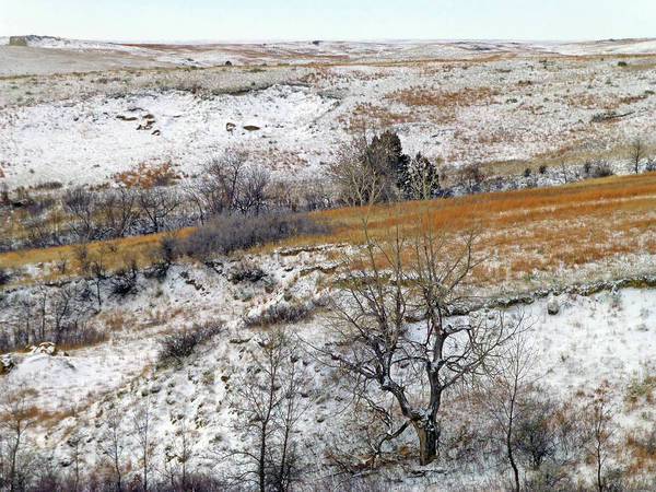 Photograph - January Grasslands by Cris Fulton
