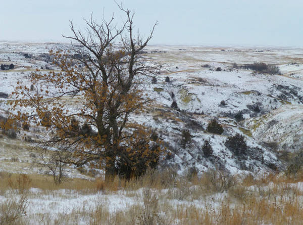 Photograph - January In The Badlands by Cris Fulton