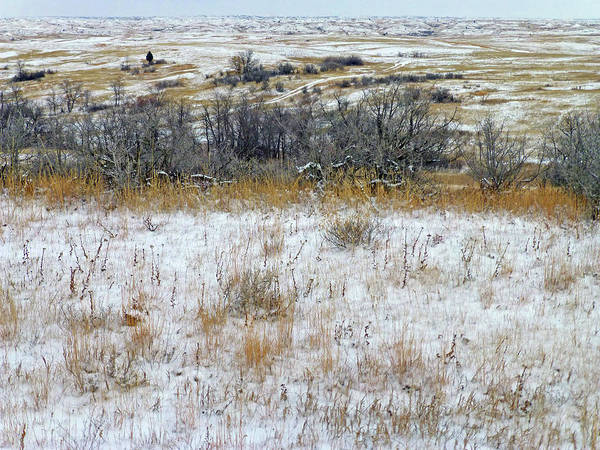 Photograph - January Prairie Trail by Cris Fulton