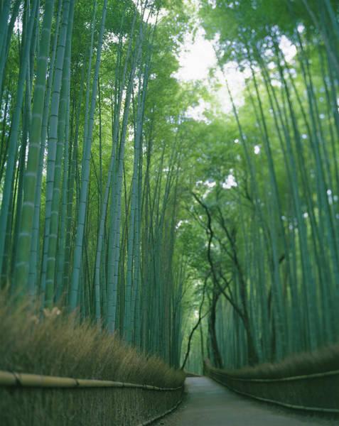 Wall Art - Photograph - Japan, Kyoto, Arasi-yama, Road Passing by Michael H