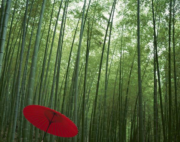 Wall Art - Photograph - Japan, Kyoto Prefecture, Red Parasol In by Takahiro Miyamoto