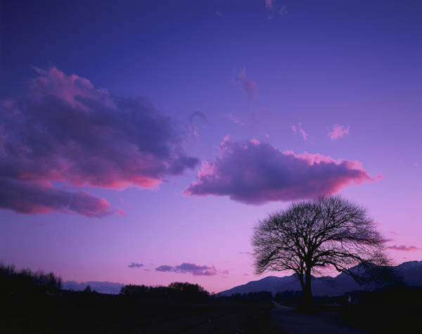 Scenery Photograph - Japan, Nagano Prefecture, Tree At Dusk by Takaaki Motohashi