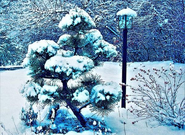 Wall Art - Photograph - Japanese Black Pine In Winter by Lee Baker DeVore