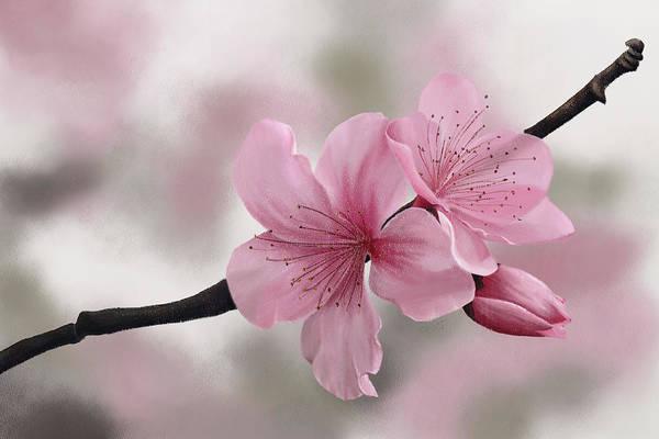 Digital Art - Japanese Cherry Flowers by Tanja Udelhofen