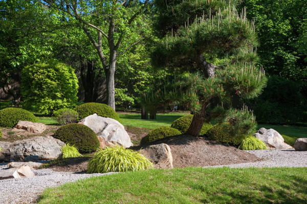 Photograph - Japanese Garden With Decorative Pine Tree And Rocks by Jenny Rainbow