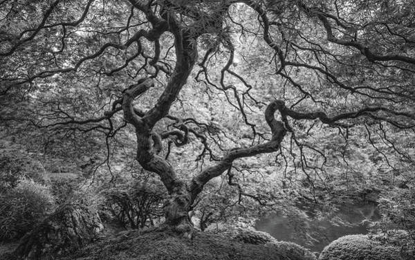Wall Art - Photograph - Japanese Maple In Bw by Joseph Smith