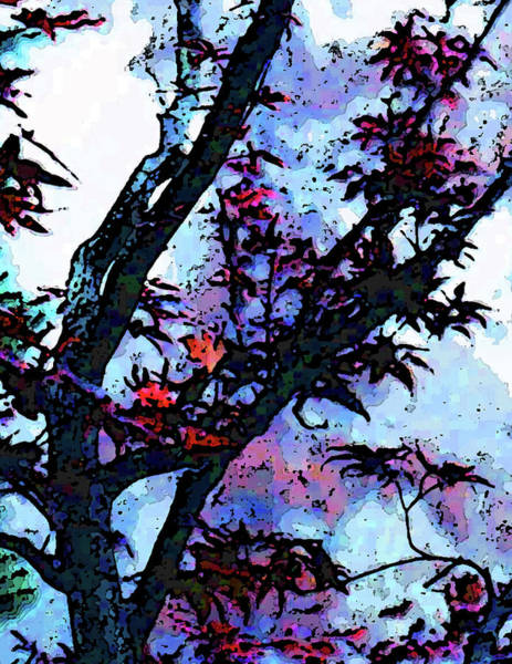 Wall Art - Photograph - Japanese Maple by Lee Baker DeVore