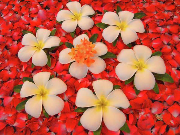 Jasmin Photograph - Jasmin Floral Display by David Smith