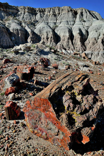 Photograph - Jasper Forest Overlook In Petrified Forest Np by Ray Mathis