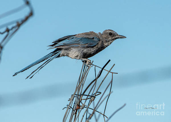 Wall Art - Photograph - Jay On A Wire by Steven Natanson