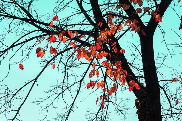 Photograph - Jazzy Autumn - by Georgia Mizuleva