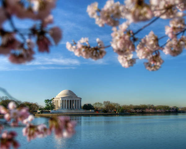 Felton Photograph - Jefferson Memorial Framed By Cherry by Eric Felton