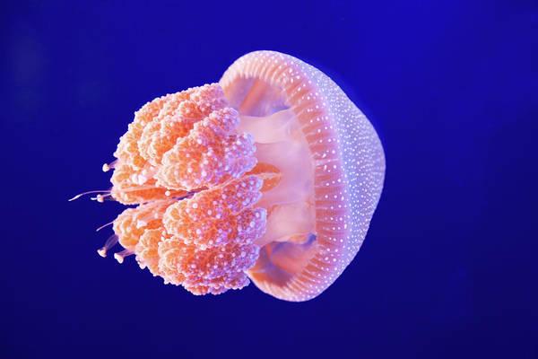 Underwater Scene Photograph - Jellyfish by Ymgerman
