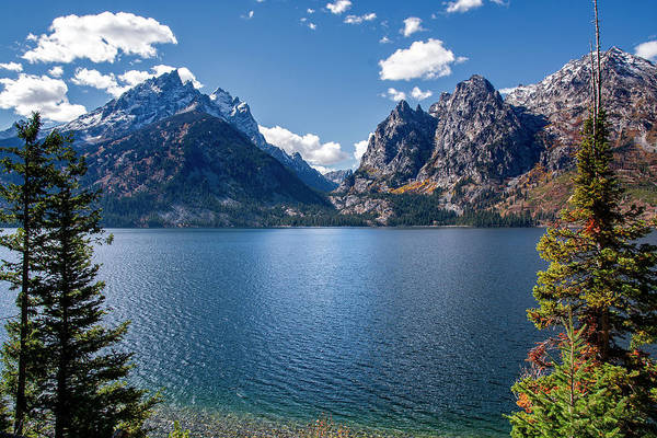 Photograph - Jenny Lake by Scott Read