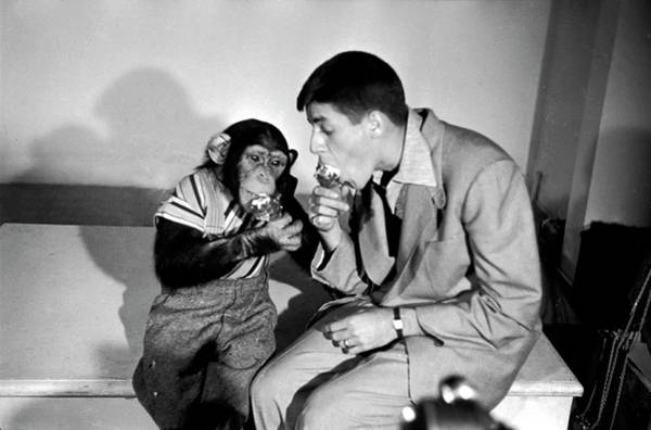Photograph - Jerry Lewis & Chimpanzee by Peter Stackpole