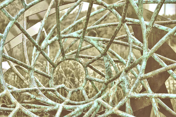Photograph - Jersey's Urchin by Jamart Photography