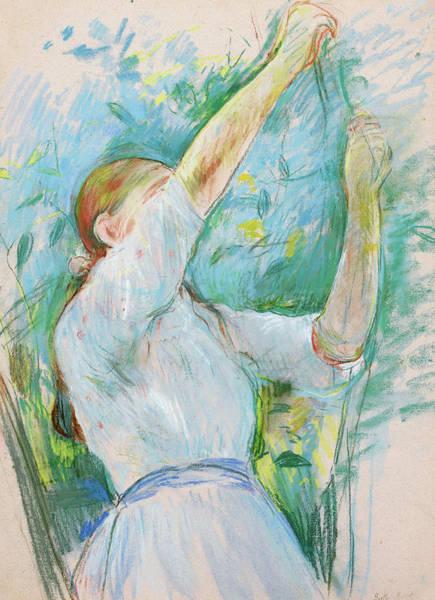 Wall Art - Painting - Jeune Fille Cueillant Des Cerises by Berthe Morisot
