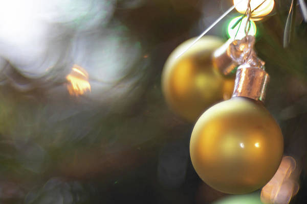 Photograph - Jingle Bells by Brian Hale