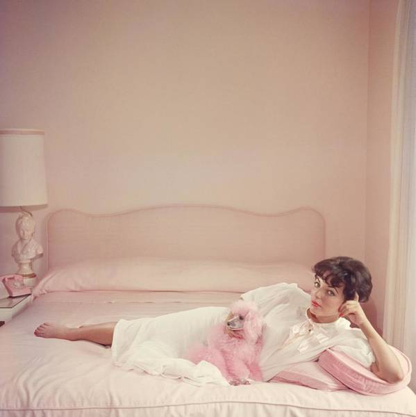 Domestic Animals Photograph - Joan Collins Relaxes by Slim Aarons