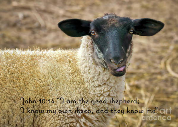 Photograph - John 10 Verse 14 by Janice Pariza