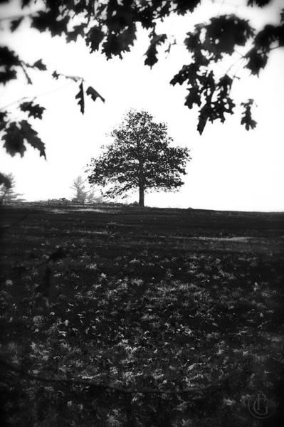 Digital Art - John's Tree 1 by Patrick Groleau