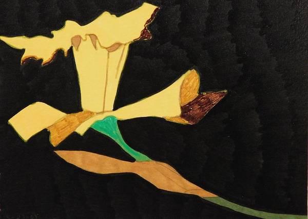 Black Narcissus Drawing - Jonquil by Wikiwakiwidow LLC