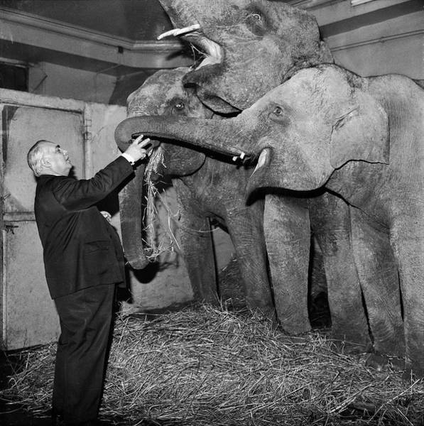 Photograph - Joseph Bouglione And His Elephants 1964 by Keystone-france